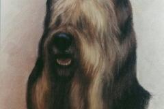 db_dog1