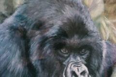 db_Gorilla